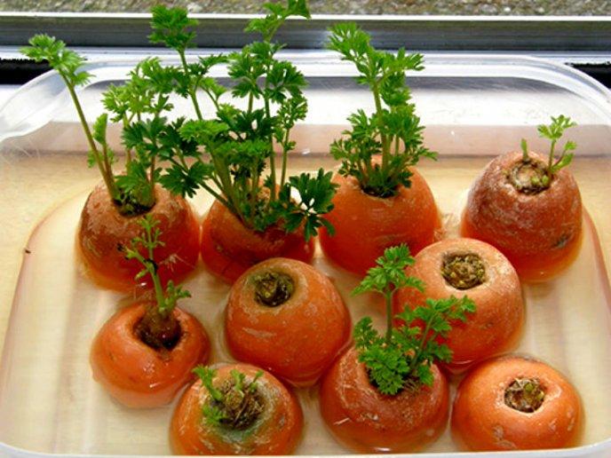 como plantar en casa zanahorias sin semillas