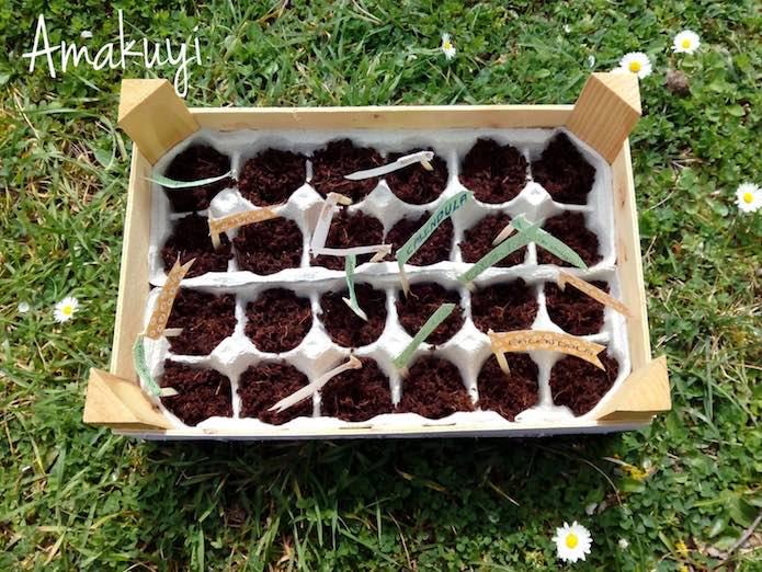 semillero en hueveras de cartón o plástico